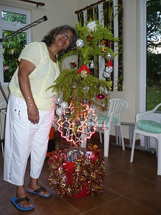 2012-12-24-1755-mauritius-cureipe-christmas-fir-tree-bought-from-forestry-department-for-gbp-6-small
